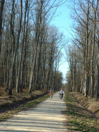 Forêt de Boulogne