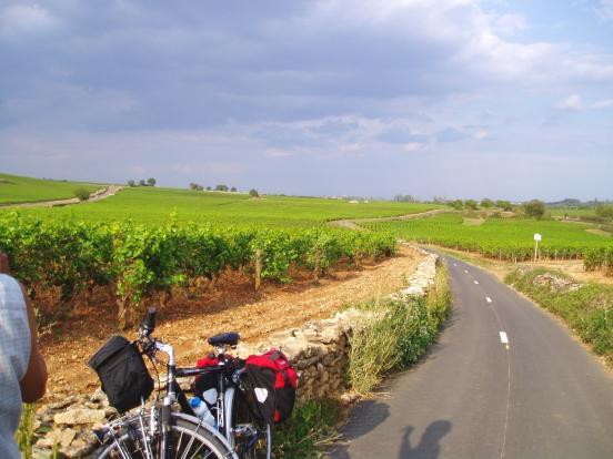 Chemin de vignes
