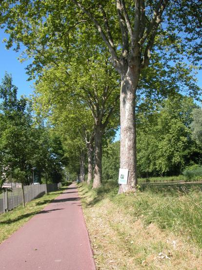 Piste du canal à Illkirch