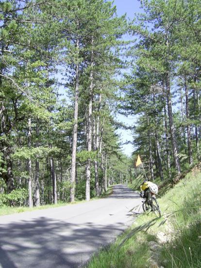 Forêt du Prieuré
