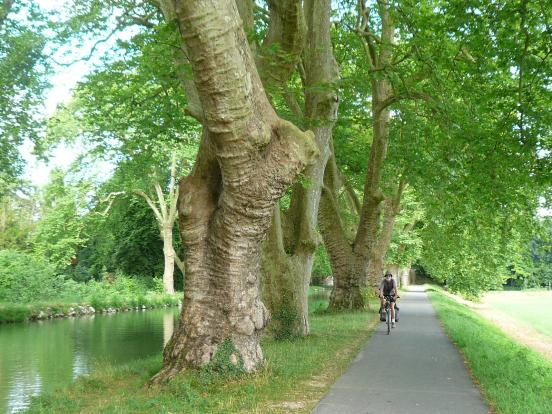 Quelques arbres