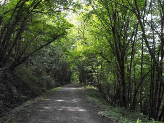 Scène sylvestre