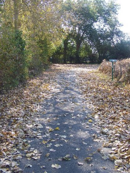 feuilles mortes
