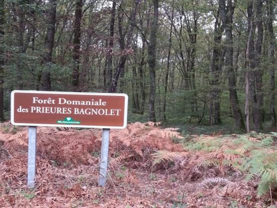 Forêt de Bagnolet