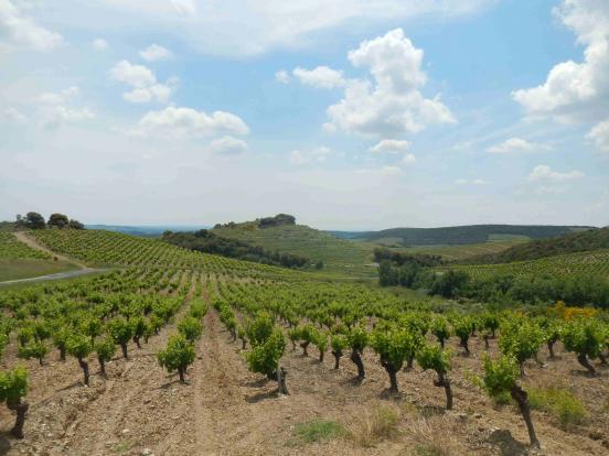 Côteaux de vignes