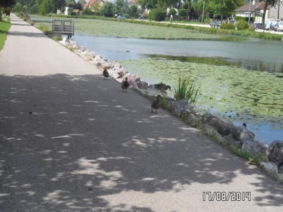 Méry sur Seine