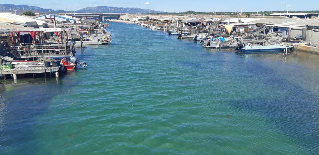 Le port ostréicole de Leucate
