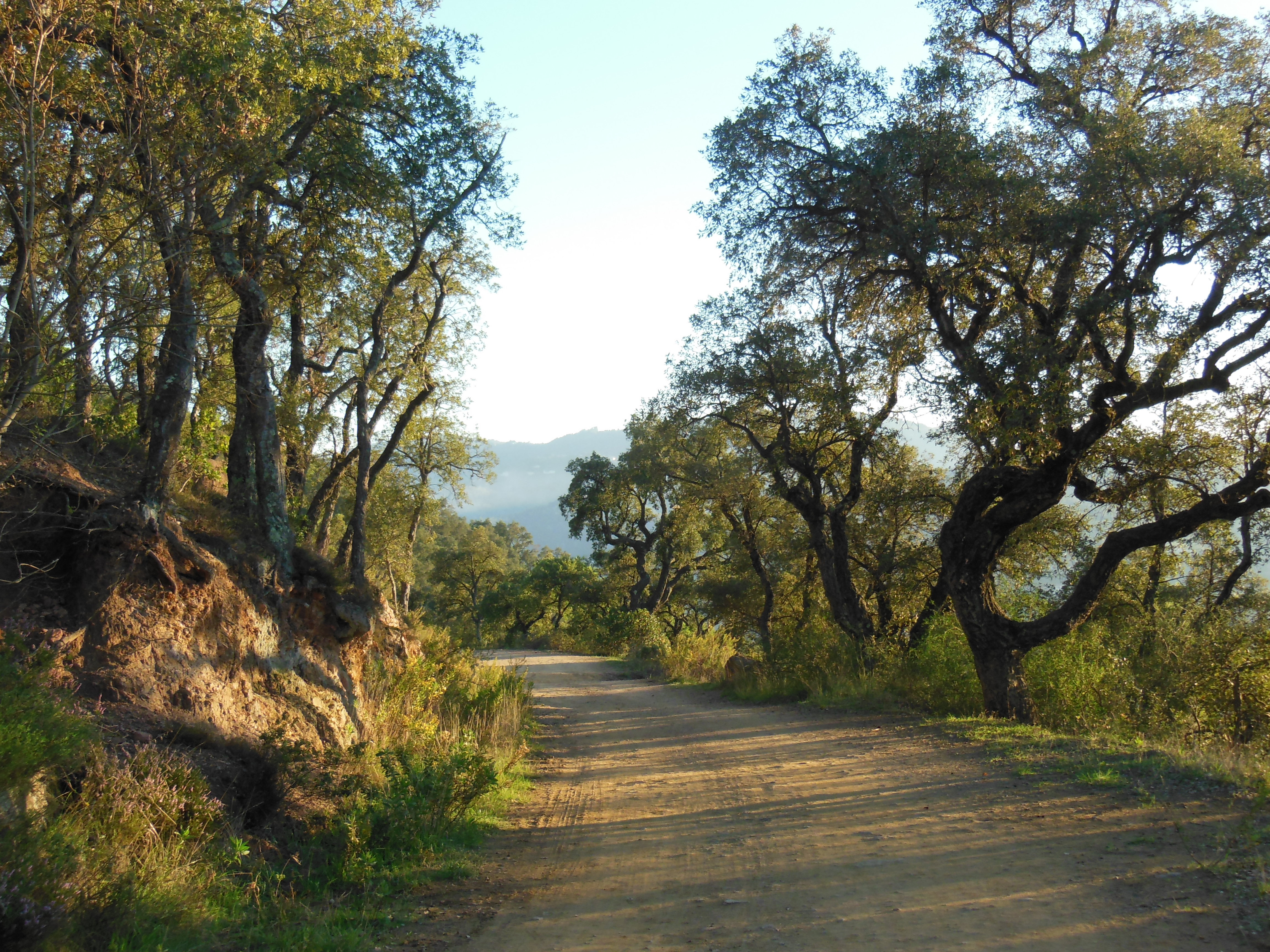 Forêt de Peygros