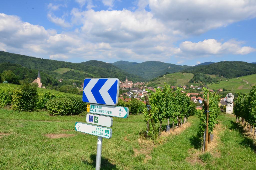 Andlau panneaux au milieu du vignoble
