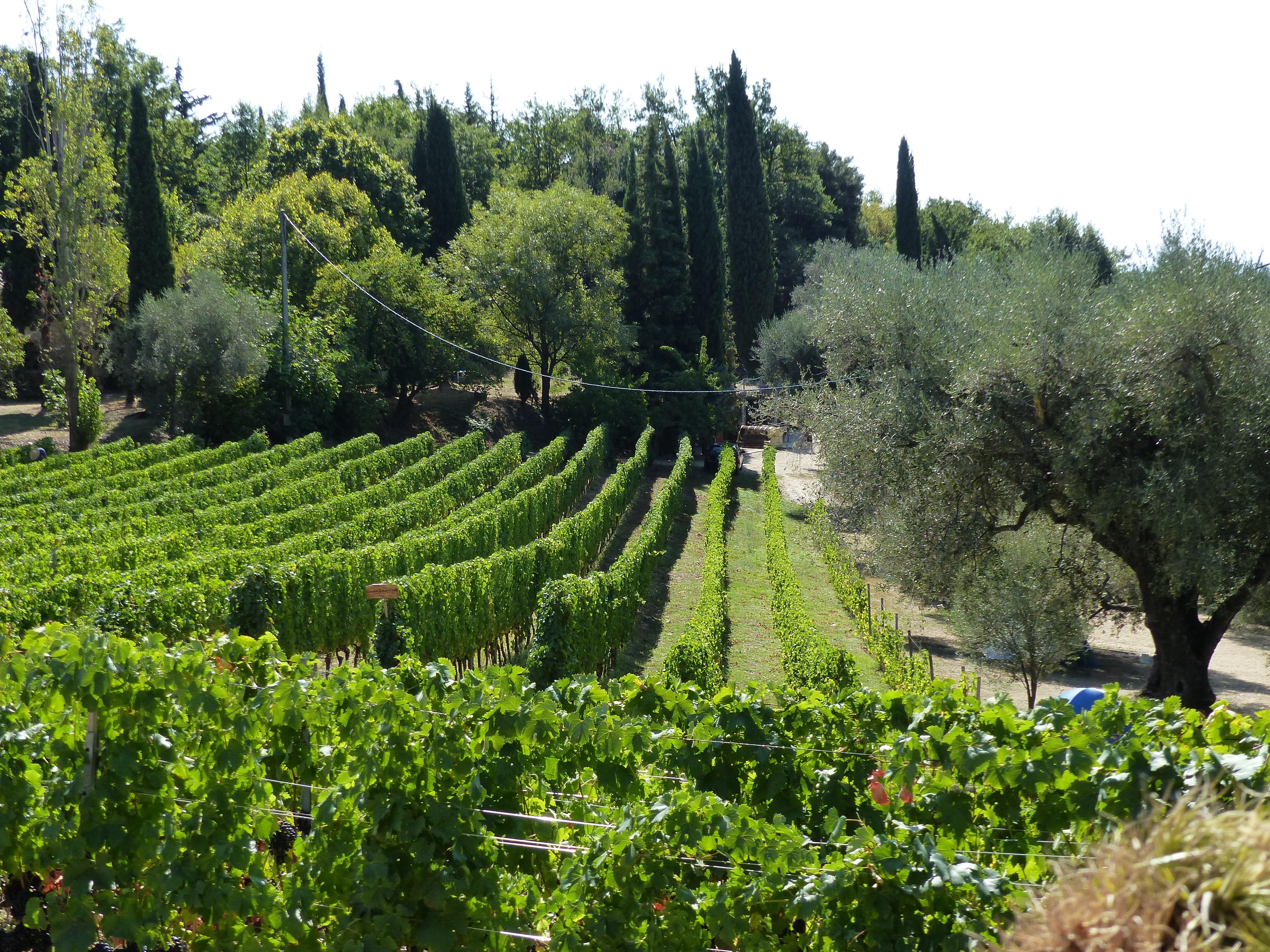 Vignoble de Saint-Jeannet